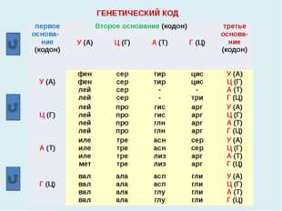 ГЕНЕТИЧЕСКИЙ КОД первое основа-ние (кодон) Второе основание(кодон) третье осн