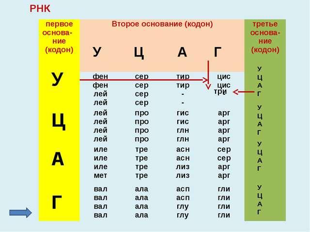 Пользуясь таблицей кода ДНК, определите, какие аминокислоты кодируют триплеты...