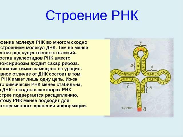 Строение РНК Строение молекул РНК во многом сходно со строением молекул ДНК....
