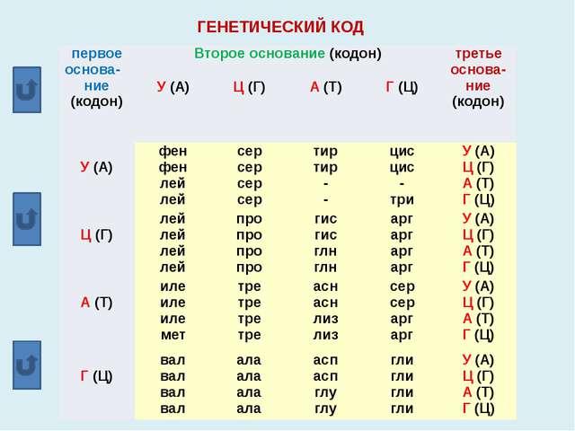 ГЕНЕТИЧЕСКИЙ КОД первое основа-ние (кодон) Второе основание(кодон) третье осн...