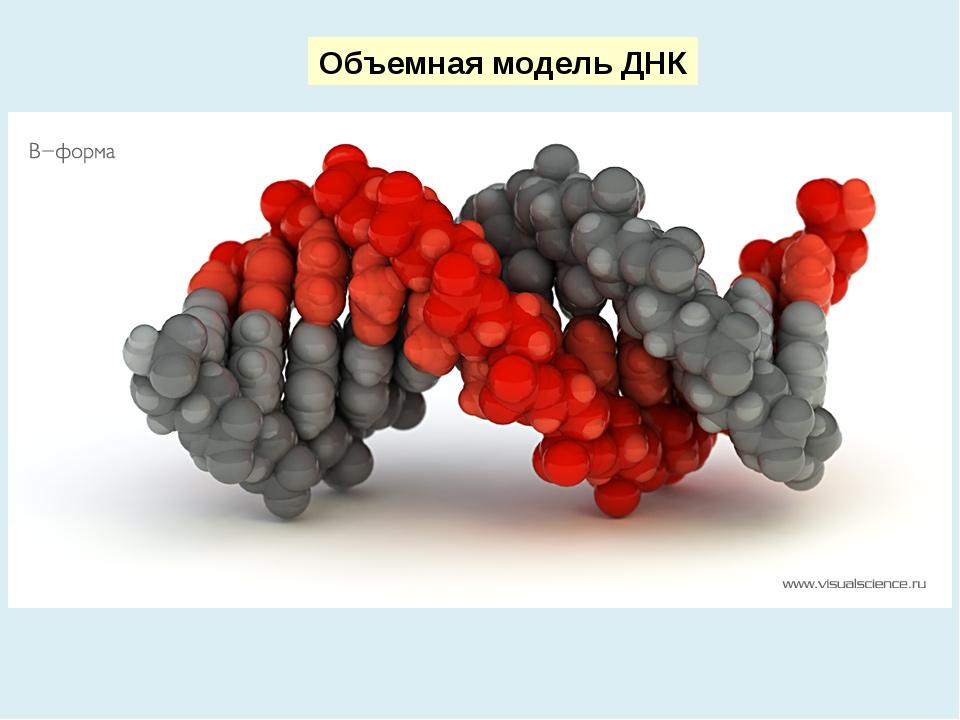 Объемная модель ДНК