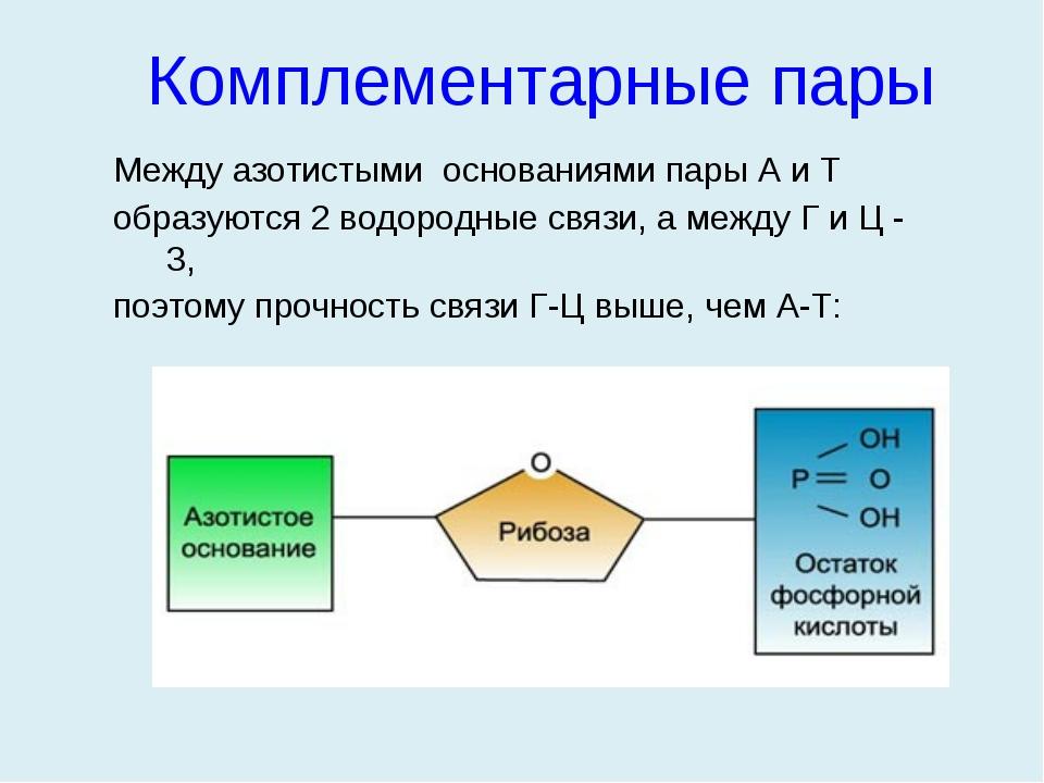 Между азотистыми основаниями пары А и Т образуются 2 водородные связи, а межд...