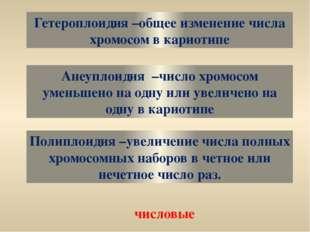 Гетероплоидия –общее изменение числа хромосом в кариотипе Анеуплоидия –число
