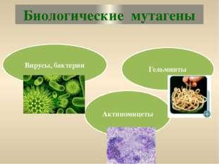 Биологические мутагены Вирусы, бактерии Гельминты Актиномицеты