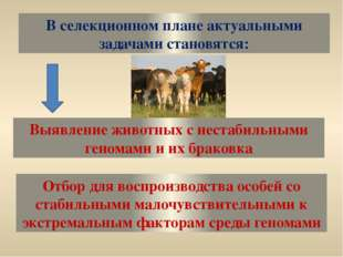 В селекционном плане актуальными задачами становятся: Выявление животных с не