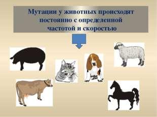 Мутации у животных происходят постоянно с определенной частотой и скоростью