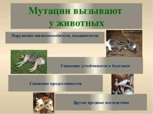 Мутации вызывают у животных Нарушение жизнеспособности, плодовитости Снижение