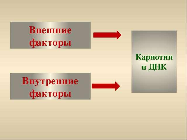 Внешние факторы Внутренние факторы Кариотип и ДНК