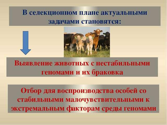 В селекционном плане актуальными задачами становятся: Выявление животных с не...