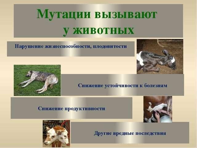 Мутации вызывают у животных Нарушение жизнеспособности, плодовитости Снижение...