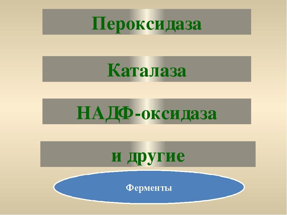 Пероксидаза Каталаза и другие НАДФ-оксидаза Ферменты