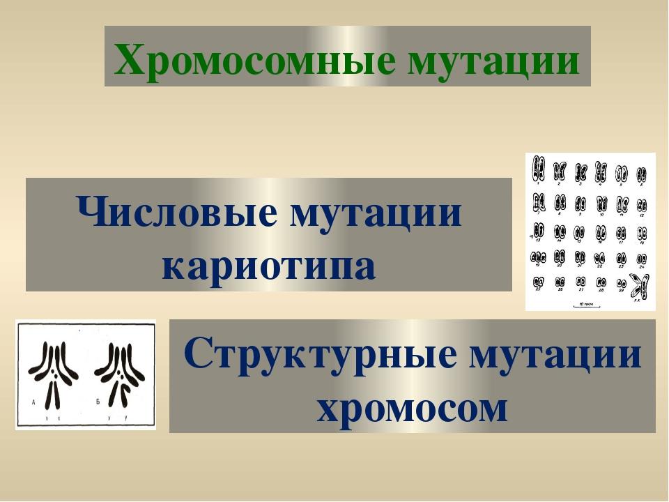Хромосомные мутации Числовые мутации кариотипа Структурные мутации хромосом