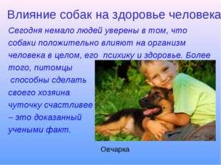 Влияние собак на здоровье человека Сегодня немало людей уверены в том, что со
