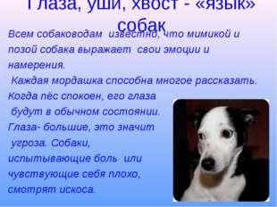Глаза, уши, хвост - «язык» собак Всем собаководам известно, что мимикой и поз