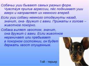 Собачьи уши бывают самых разных форм. Чувствуя прилив агрессии, пёс поднимает