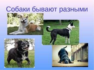 Собаки бывают разными