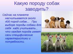 Какую породу собак заводить? Сейчас на планете насчитывается около 400 пород