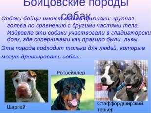 Бойцовские породы собак Собаки-бойцы имеют общие признаки: крупная голова по