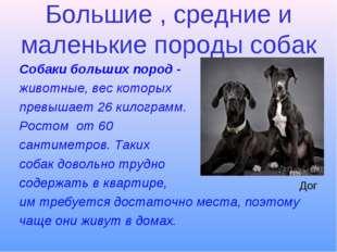 Большие , средние и маленькие породы собак Собаки больших пород - животные, в