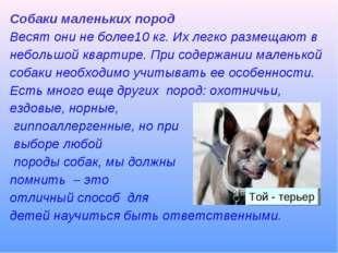 Собаки маленьких пород Весят они не более10 кг. Их легко размещают в небольшо
