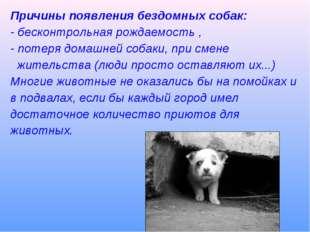 Причины появления бездомных собак: - бесконтрольная рождаемость , - потеря до