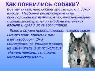 Как появились собаки? Все мы знаем, что собаки произошли от диких волков. На