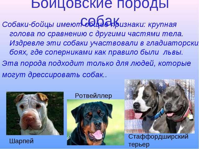Бойцовские породы собак Собаки-бойцы имеют общие признаки: крупная голова по...