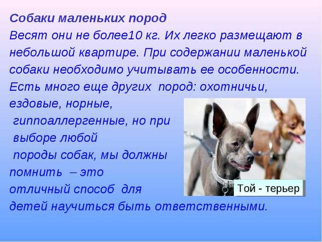 Собаки маленьких пород Весят они не более10 кг. Их легко размещают в небольшо...