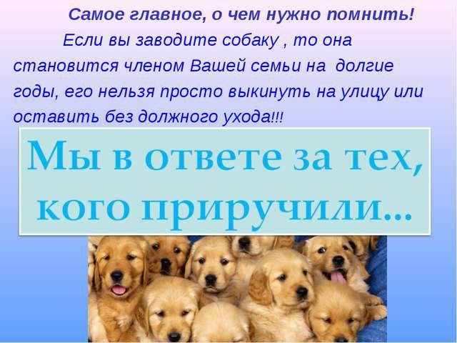 Самое главное, о чем нужно помнить! Если вы заводите собаку , то она станови...