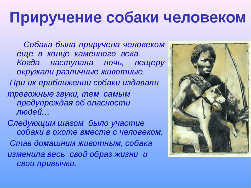 Приручение собаки человеком Собака была приручена человеком еще в конце каме...