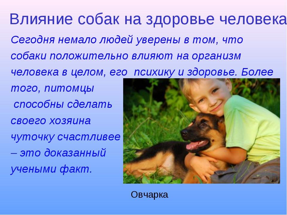 Влияние собак на здоровье человека Сегодня немало людей уверены в том, что со...