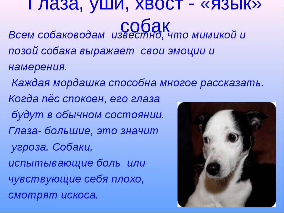 Глаза, уши, хвост - «язык» собак Всем собаководам известно, что мимикой и поз...