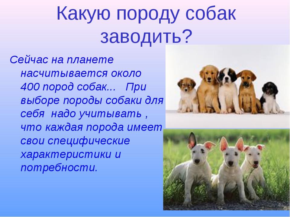 Какую породу собак заводить? Сейчас на планете насчитывается около 400 пород...