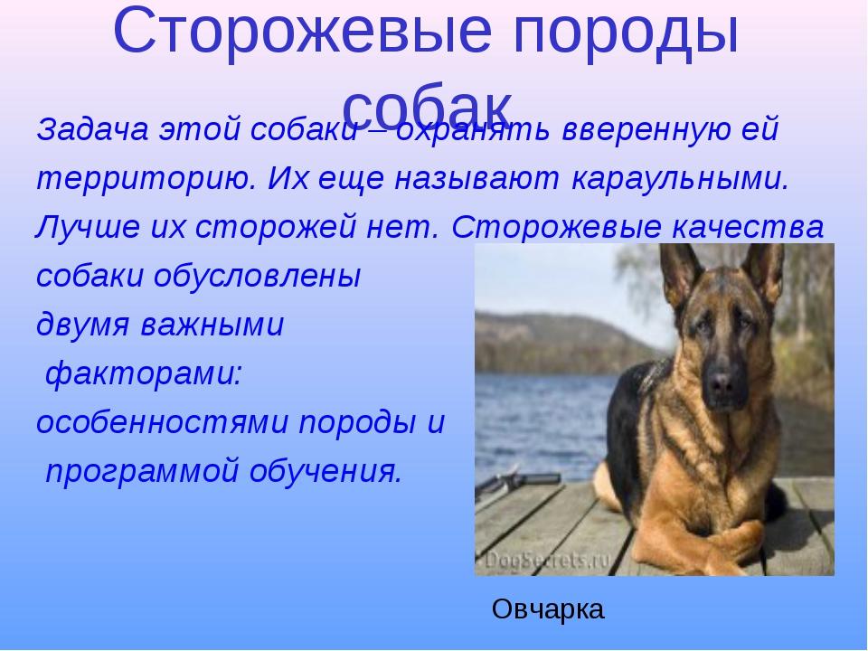 Сторожевые породы собак Задача этой собаки – охранять вверенную ей территорию...
