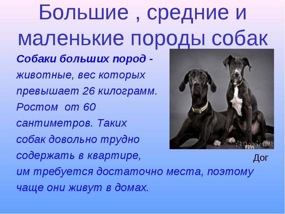 Большие , средние и маленькие породы собак Собаки больших пород - животные, в...