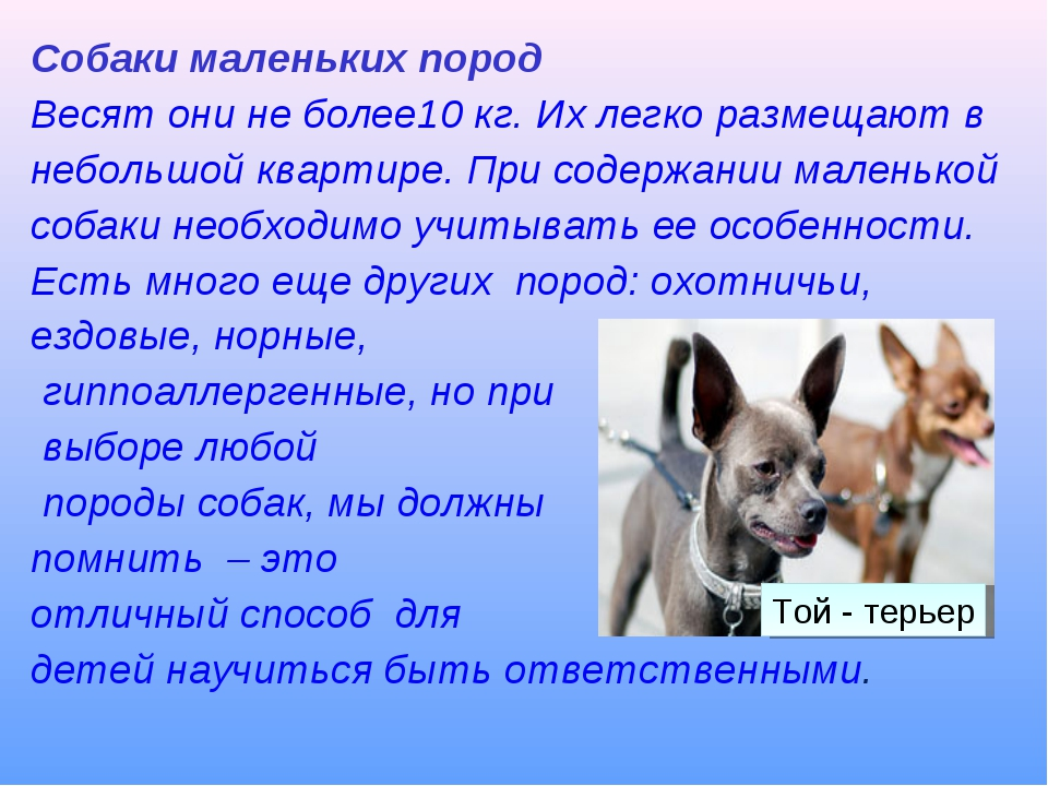 Смс картинки, картинки собака друг человека с текстом