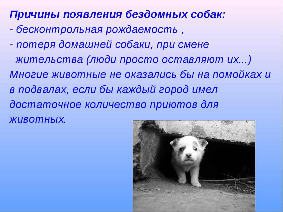 Причины появления бездомных собак: - бесконтрольная рождаемость , - потеря до...