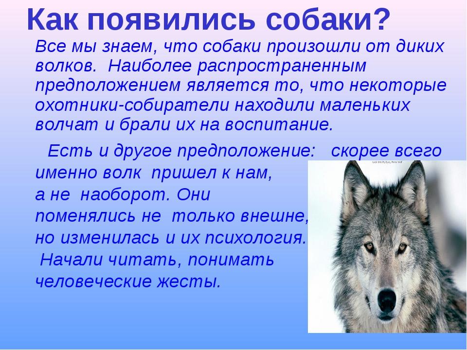 Как появились собаки? Все мы знаем, что собаки произошли от диких волков. На...
