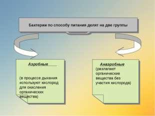 Бактерии по способу питания делят на две группы Анаэробные (разлагают органич