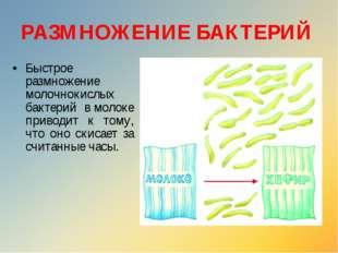 Быстрое размножение молочнокислых бактерий вмолоке приводит к тому, что оно