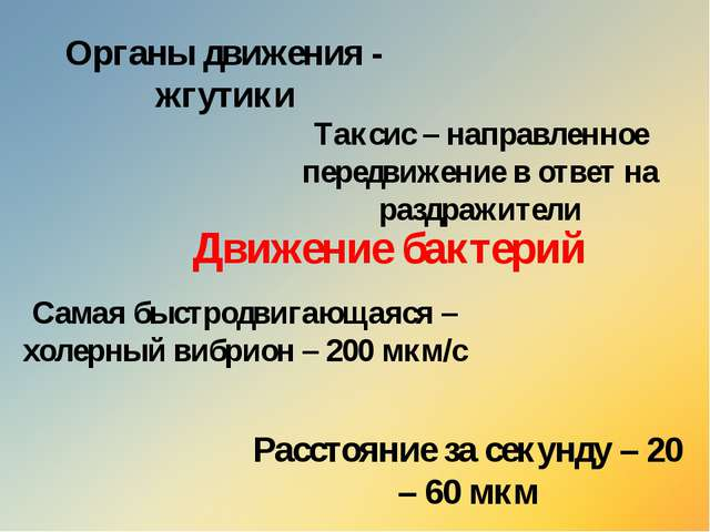 Движение бактерий Органы движения - жгутики Расстояние за секунду – 20 – 60 м...