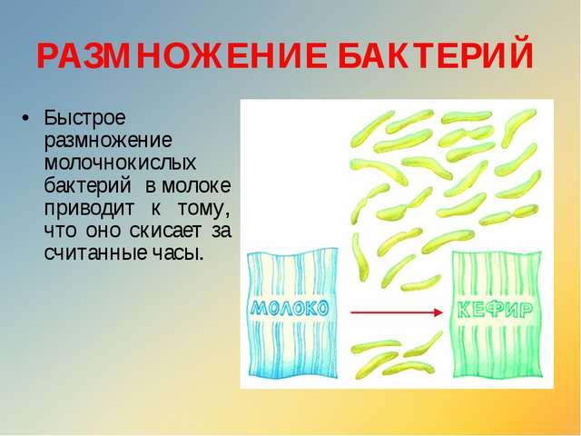 Быстрое размножение молочнокислых бактерий вмолоке приводит к тому, что оно...
