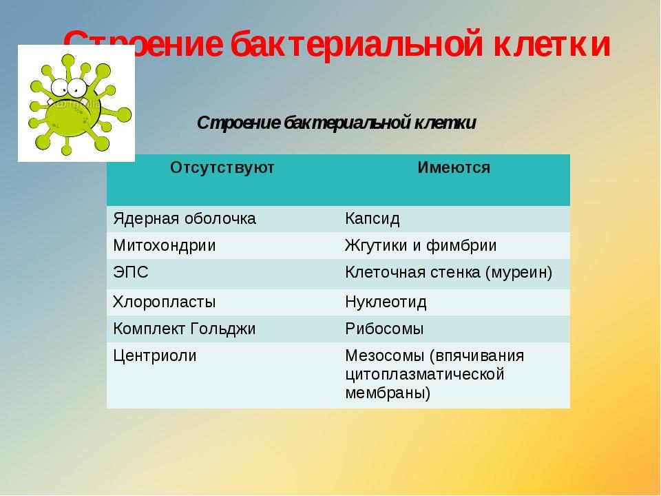Строение бактериальной клетки  Строение бактериальной клетки ОтсутствуютИме...
