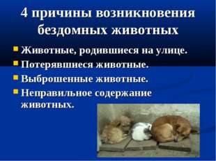 4 причины возникновения бездомных животных Животные, родившиеся на улице. Пот