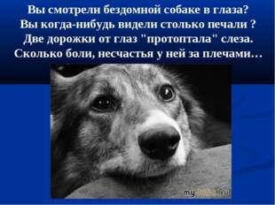 Вы смотрели бездомной собаке в глаза? Вы когда-нибудь видели столько печали ?
