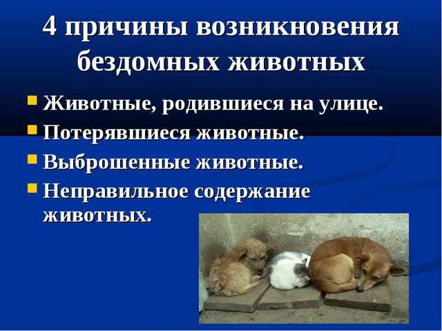 4 причины возникновения бездомных животных Животные, родившиеся на улице. Пот...