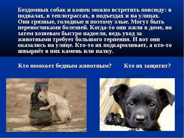 Бездомных собак и кошек можно встретить повсюду: в подвалах, в теплотрассах,...