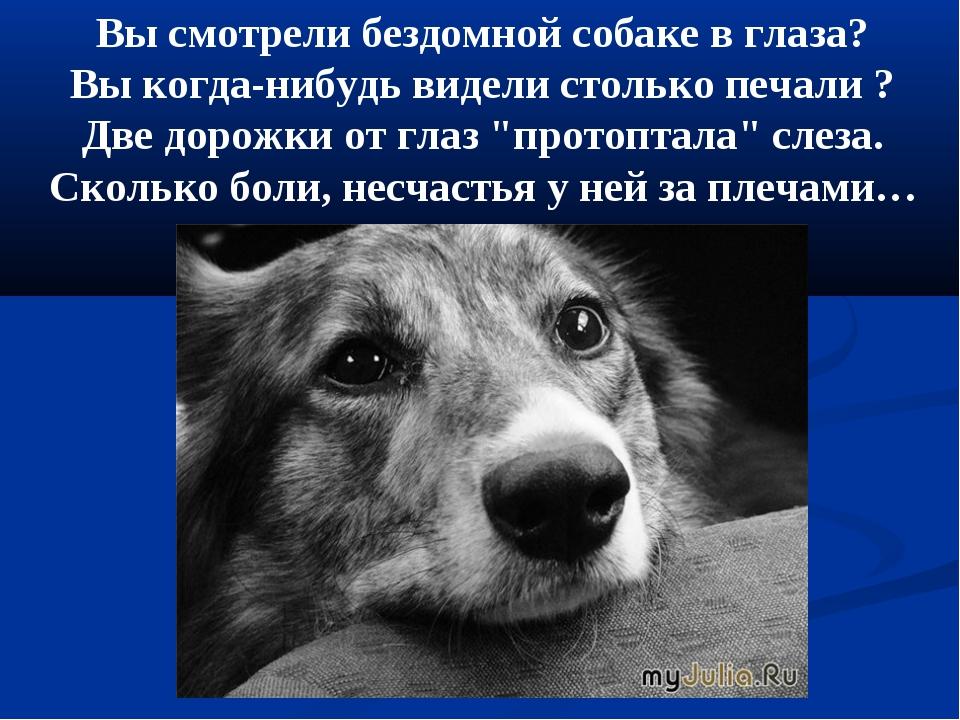 Вы смотрели бездомной собаке в глаза? Вы когда-нибудь видели столько печали ?...