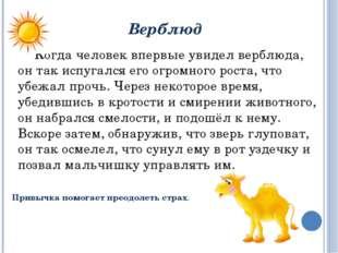 Верблюд Когда человек впервые увидел верблюда, он так испугался его огромног