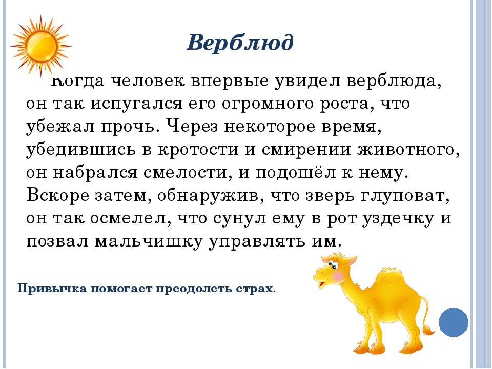 Верблюд Когда человек впервые увидел верблюда, он так испугался его огромног...